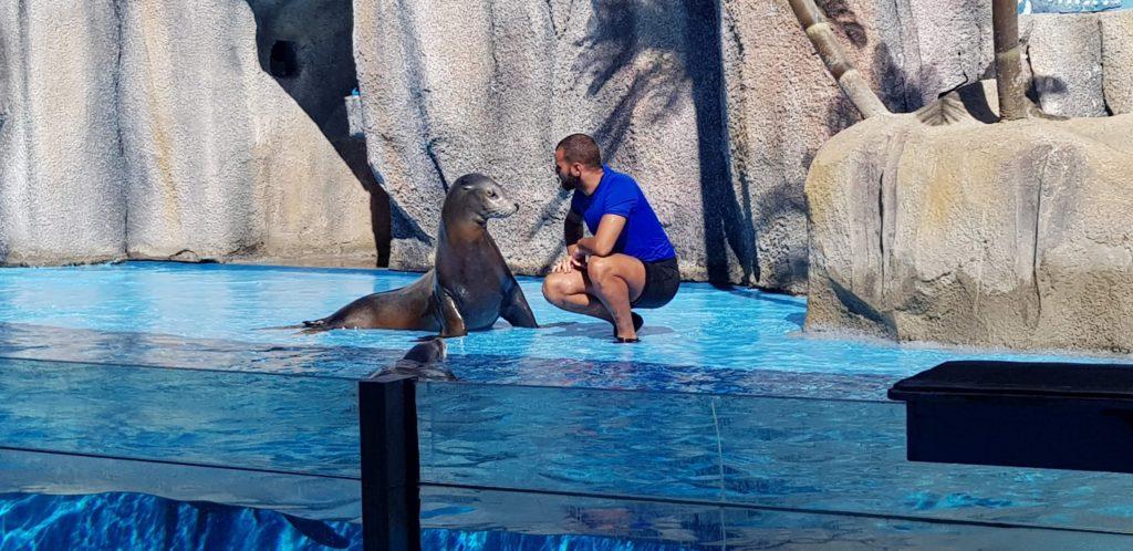 Шоу морских котиков в Зоомарин