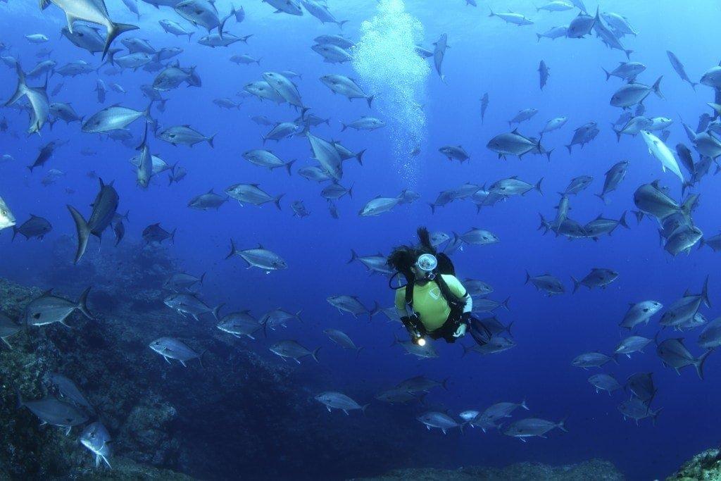 Дайвинг на азорских островах