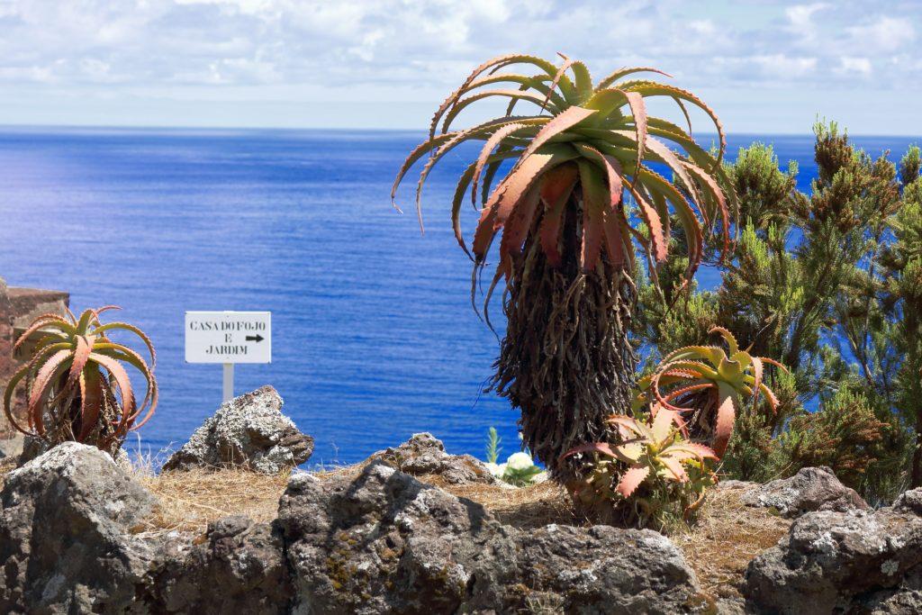 Флора островов