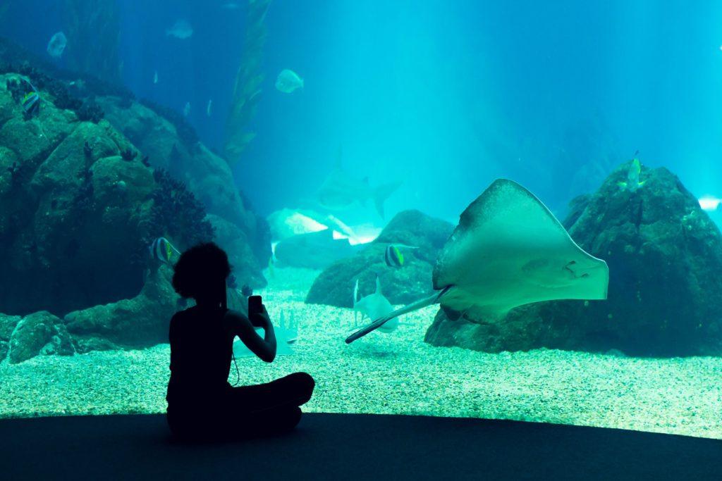 центральны аквариум океанариума