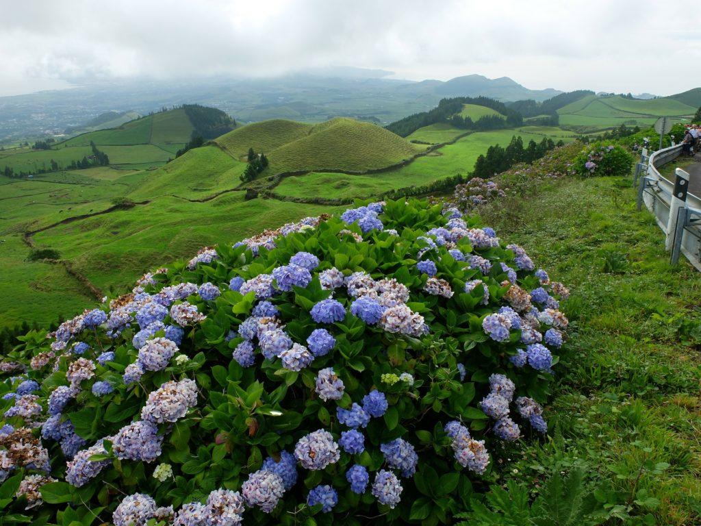 Символом островов считается цветущая гортензия.