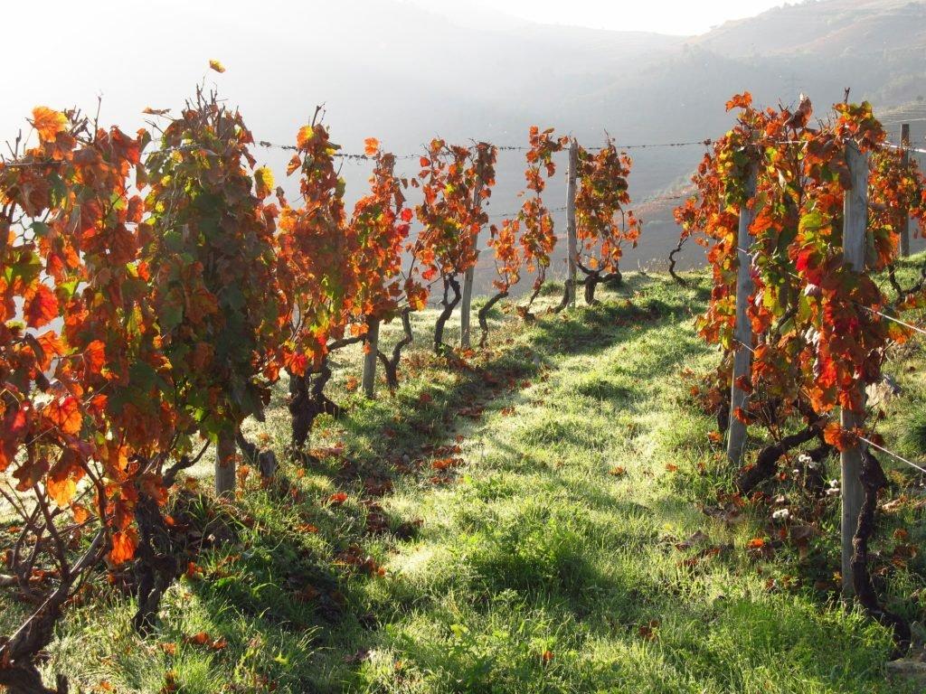 Осень в долине Дору