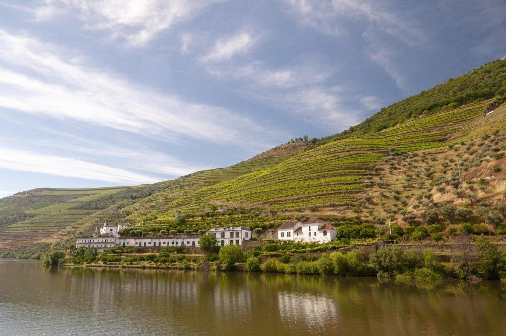 Виноградники в долине