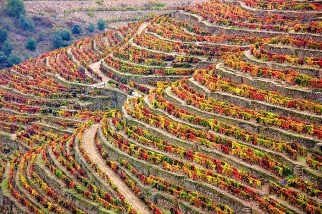 Зимние виноградники
